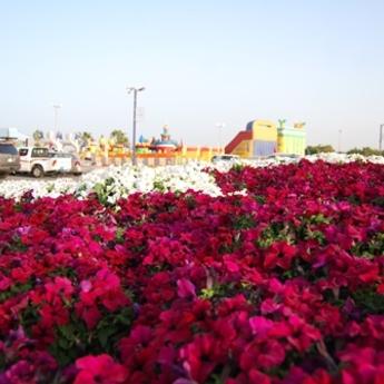PRAZNIK ZA OČI: Festivali cveća u zemlji pustinje (FOTO)