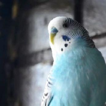 Sarajevska atrakcija: Upoznajte Kukija, papagaja koji se smeje i priča (VIDEO)