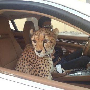 11 stvari koje možete videti samo u Dubaiju
