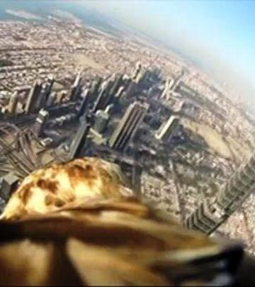 Zadivljujući snimak: Let orla sa Burdž Kalife (VIDEO)