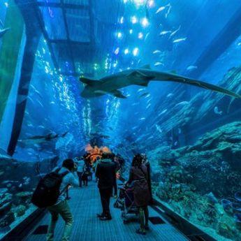 Zavirite u Dubai akvarijum