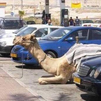 Ovo je moguće samo u Dubaiju