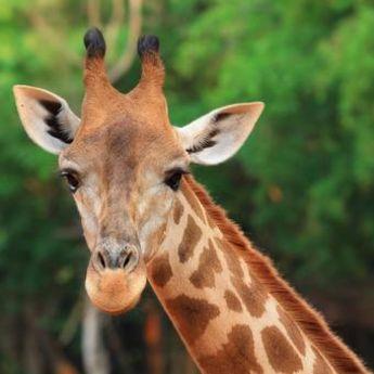Dubai Safari: Dom za 1.000 životinja iz celog sveta (VIDEO)
