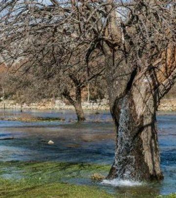 Fenomen u Crnoj Gori: Drvo kao fontana (VIDEO)