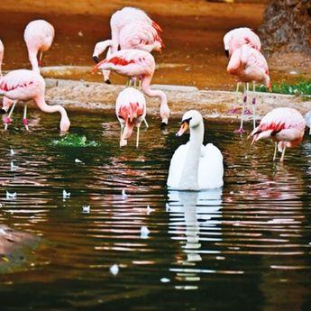 ZOO vrt u El Ainu: Životinjsko carstvo u Zelenom gradu