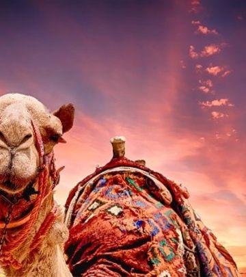 Ovo je moguće samo u Saudiji: Kamila u šopingu! (VIDEO)